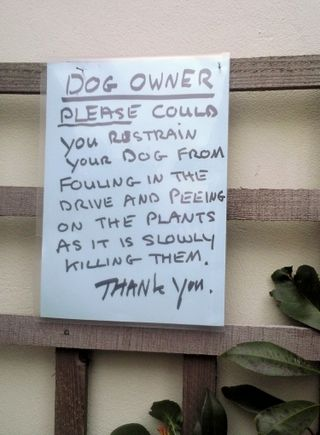 Restrain your dog
