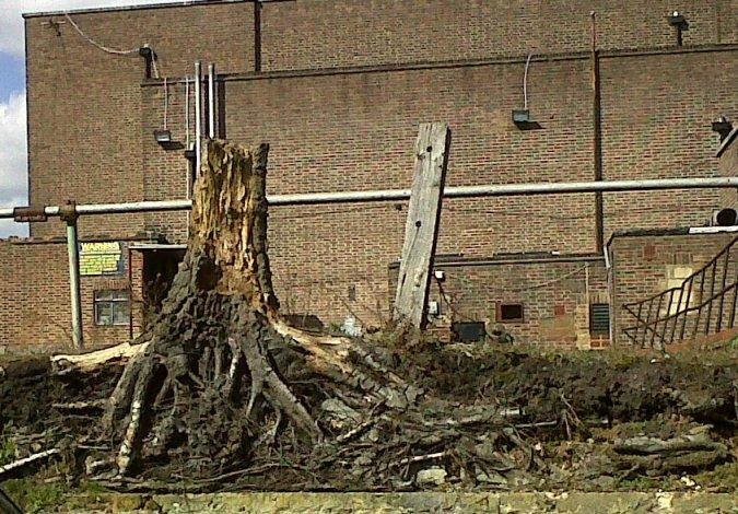 Remaining tree