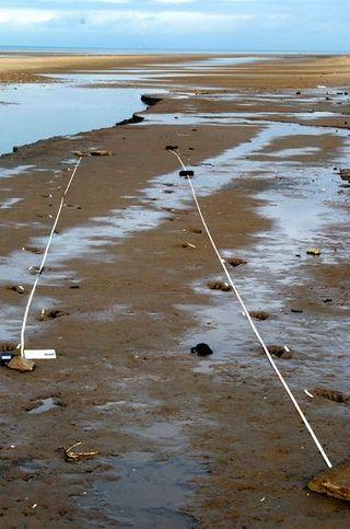 Formby footprints Robt Macfarlane pic